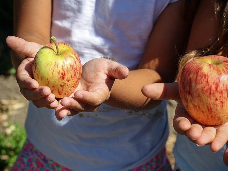 apple voluntaryist property rights